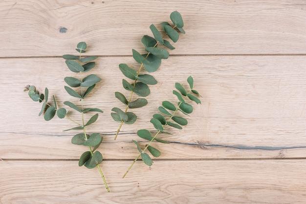 Feuilles d'eucalyptus vert et brindilles sur fond texturé en bois