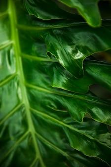Feuilles exotiques vertes se bouchent