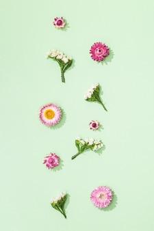 Feuilles de fleurs colorées sèches naturelles et petites fleurs sur vert tendre