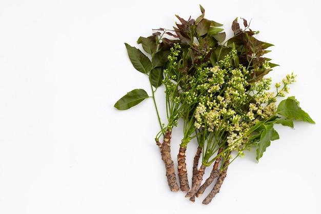 Feuilles et fleurs de neem sur fond blanc.