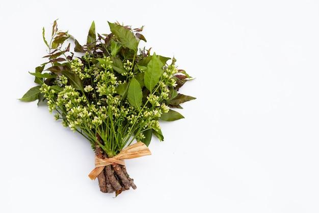 Feuilles et fleurs de neem sur tableau blanc