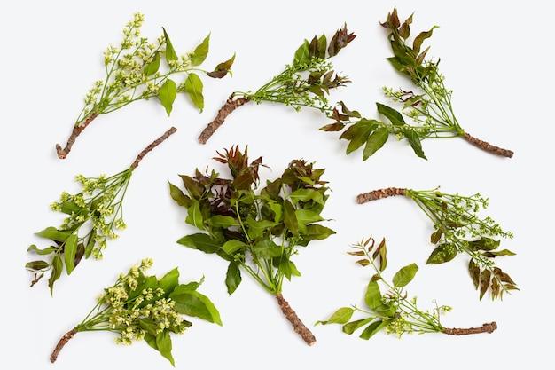 Feuilles et fleurs de neem sur wihte