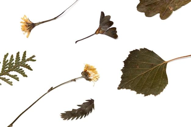 Feuilles et fleurs séchées d'autres plantes. herbier sur fond blanc, vue de dessus sur les plantes sèches à plat