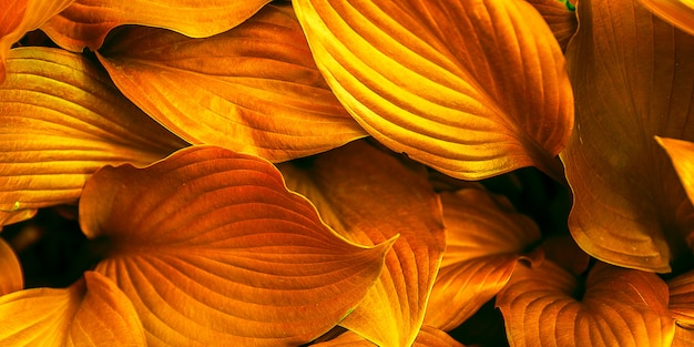 Feuilles de fond toniques à la couleur orange.