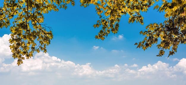 Feuilles en forêt d'automne