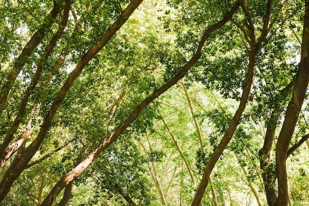 Feuilles de forêt