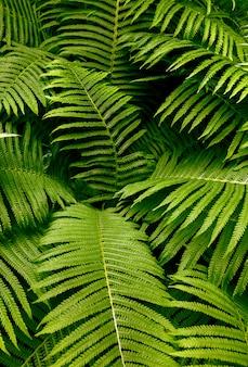 Feuilles fougère pluie gouttes tropical