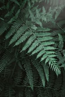 Feuilles de fougère et le ruisseau de la forêt sombre
