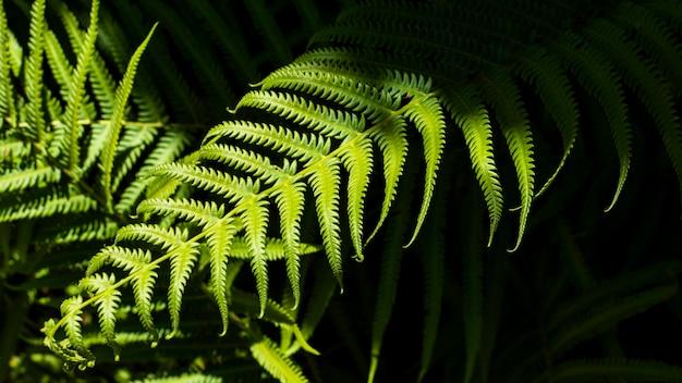Feuilles de fougère tropicale avec des ombres