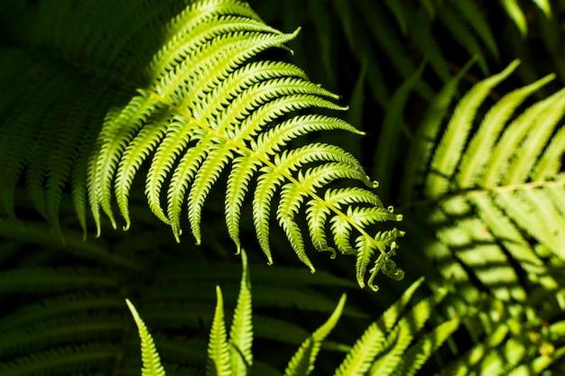 Feuilles de fougère tropicale