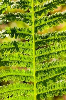Feuilles de fougère verte éclairées par la lumière du soleil les feuilles de fougère verte avec des pétales lumineux
