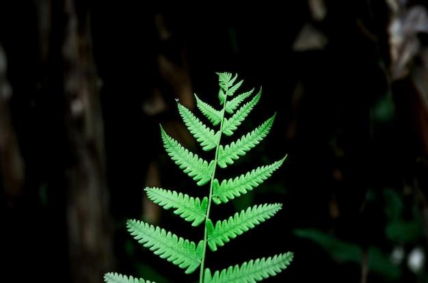 Feuilles de fougère verte et et gros plan de feuilles de fougère