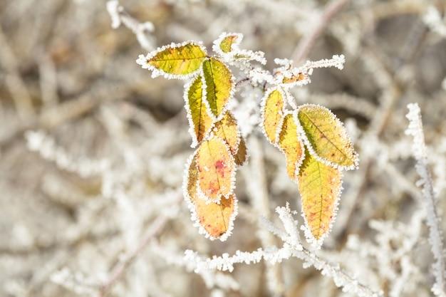 Feuilles gelées dans la forêt - symbole du début de l'hiver