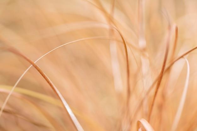 Feuilles d'herbe de nuances jaunes floues