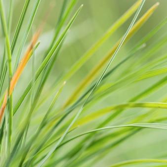 Feuilles d'herbe de nuances vertes floues