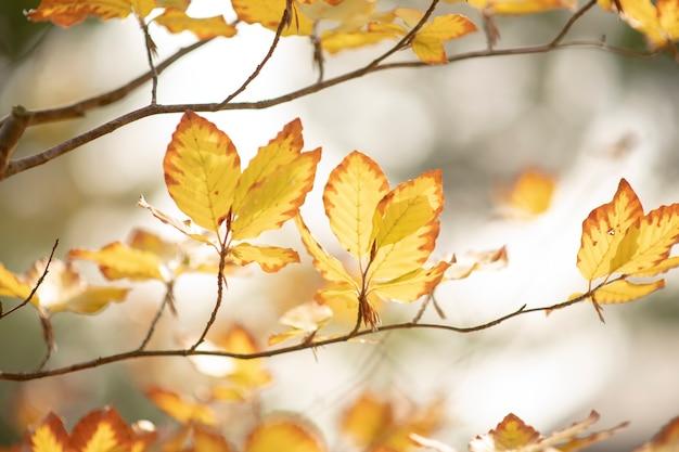 Feuilles jaunes d'automne sur une branche