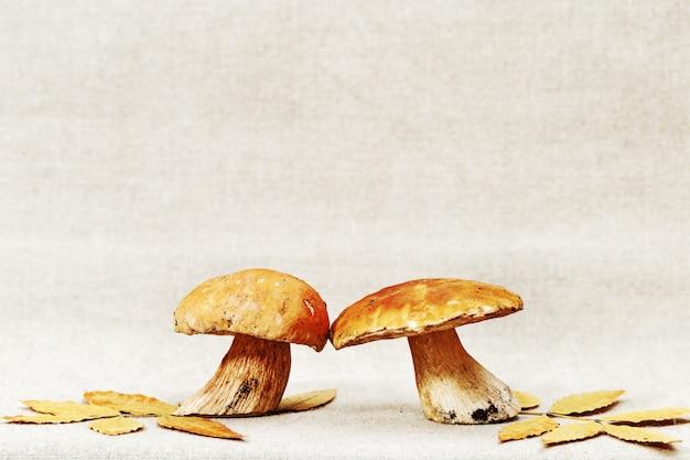 Feuilles jaunes d'automne et cèpes de champignons forestiers avec copie espace. contexte alimentaire