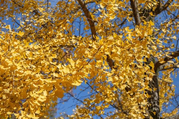 Feuilles jaunes en saison d'automne