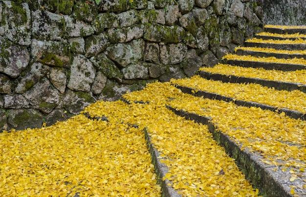 Feuilles jaunes tombées de ginkgo sur les marches