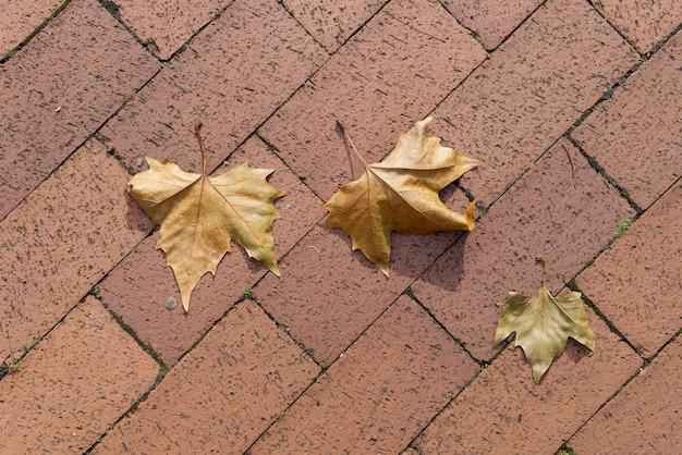 Feuilles jaunes sur le trottoir