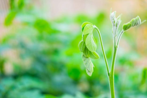 Feuilles de jeunes feuilles