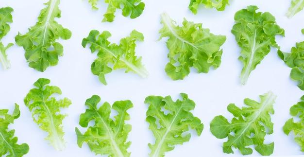 Feuilles de laitue de chêne vert sur fond blanc. vue de dessus