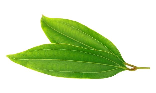 Feuilles de laurier vert frais isolés sur fond blanc
