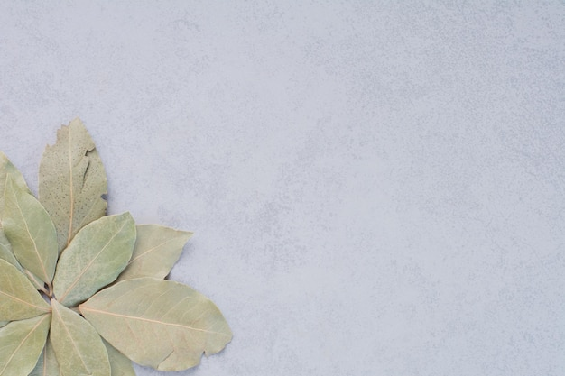 Feuilles de laurier vertes sèches sur fond de béton.
