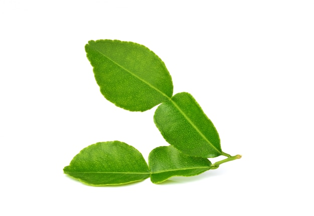 Feuilles de lime kaffir ou feuille de bergamote sur blanc