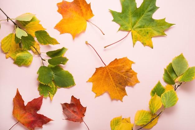 Feuilles lumineuses de couleur automne sur fond pastel rose, vue de dessus, mise à plat