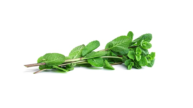 Feuilles de menthe fraîche et verte sur fond blanc. photo de haute qualité