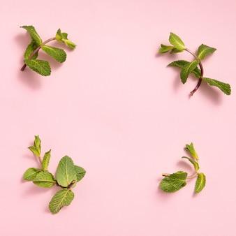 Feuilles de menthe verte sur fond rose
