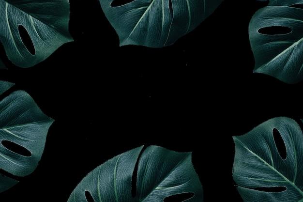 Feuilles de monstera magiques à disposition minimale de la jungle dans la forêt tropicale comme motif créatif et espace de copie