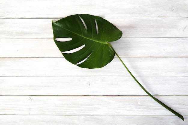 Feuilles de monstera vert sur fond en bois blanc