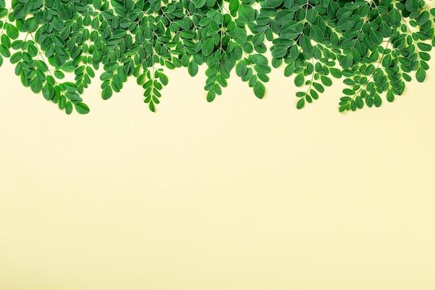 Feuilles de moringa fraîches sur fond jaune