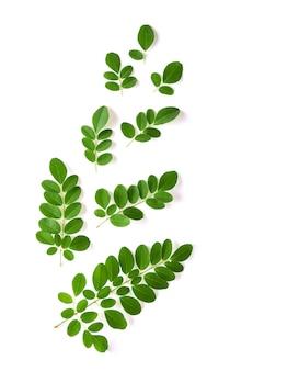 Les feuilles de moringa ont des propriétés médicinales. vue de dessus