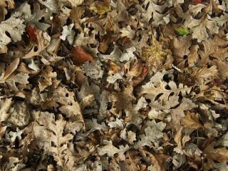 Feuilles mortes en automne texture