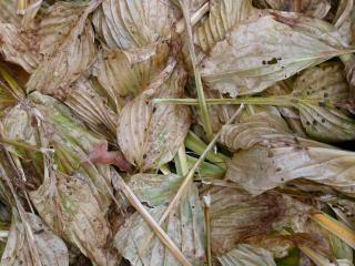 Feuilles mortes, l'automne