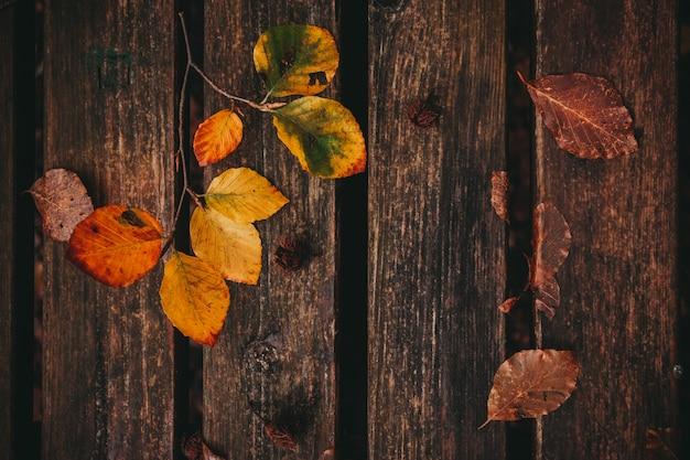 Feuilles mortes sur le banc, fond d'automne et d'automne