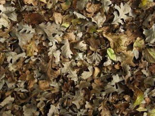 Feuilles mortes feuilles de texture