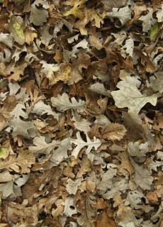 Feuilles mortes texture organique