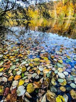 Feuilles mortes tombées flottant à la surface de l'eau