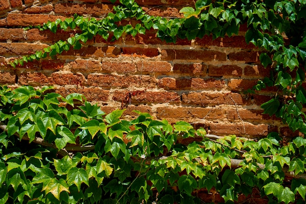 Feuilles sur le mur de briques comme papier peint.