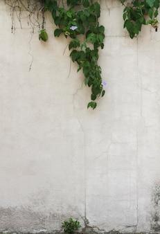 Feuilles naturelles et fond de mur de l'espace de copie