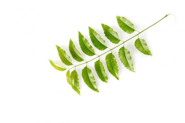 Feuilles de neem