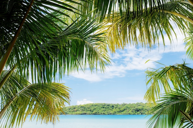 Feuilles de noix de coco à la mer en été avec ciel.