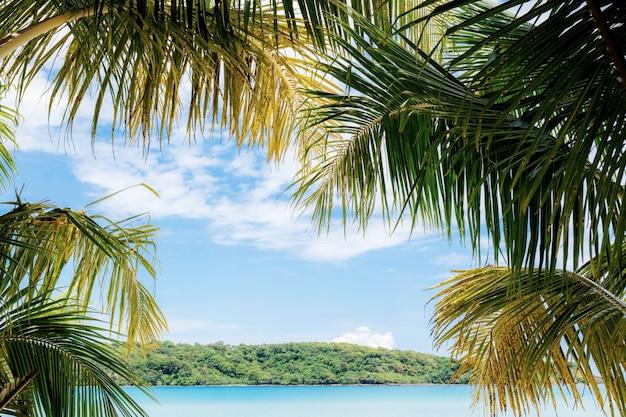 Feuilles de noix de coco en mer.