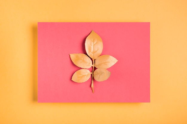 Feuilles orange sur rectangle rose