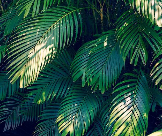 Feuilles de palmier abstrait tropical laisse une fleur colorée sur la nature de feuillage tropical foncé