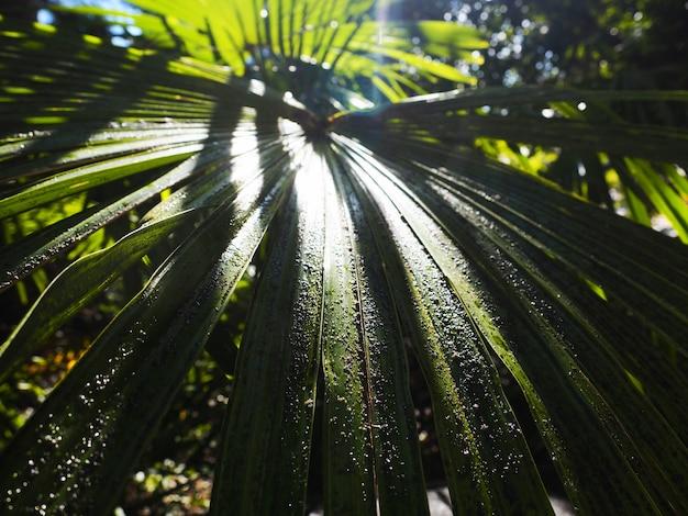 Feuilles de palmier après la pluie